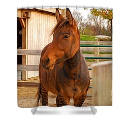 Zorse Shower Curtain by Mary Carol Story