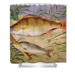 An Angler's Catch Of Coarse Fish Shower Curtain by D Wolstenholme
