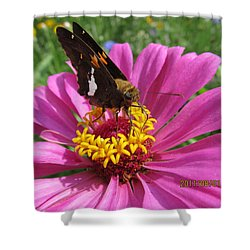 Shower Curtain featuring the photograph  Butterfly On Pink Flower by Tina M Wenger