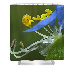 Close View Of Slender Dayflower Flower With Dew Shower Curtain