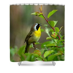 Common Yellowthroat Warbler Warbling Dsb006 Shower Curtain by Gerry Gantt