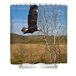 Shower Curtain featuring the photograph  Eagle Circleing Her Nest by Randall Branham