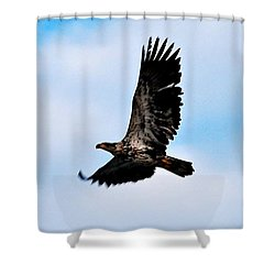 Shower Curtain featuring the photograph  Juvenile Bald Eagle by Peggy Franz