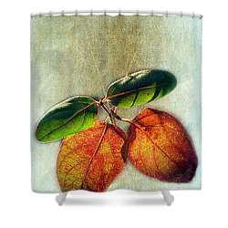 Memory Of Leaves Shower Curtain by Judi Bagwell
