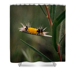 Struttin Your Stuff Shower Curtain