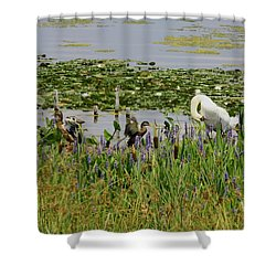 Swan And The Duck's Shower Curtain
