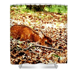 Shower Curtain featuring the photograph  Sweet Baby Elk by Peggy Franz