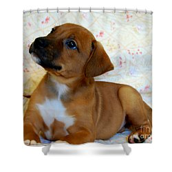 Shower Curtain featuring the photograph   Take Me Home Please by Peggy Franz