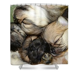 The Gang   Cute Puppies Shower Curtain by Peggy Franz