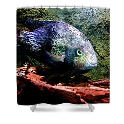 1 Fish Living In Denmark Shower Curtain by Colette V Hera  Guggenheim