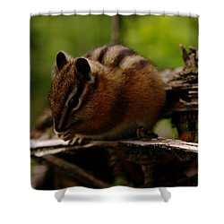 A Little Chipmunk Shower Curtain by Jeff Swan