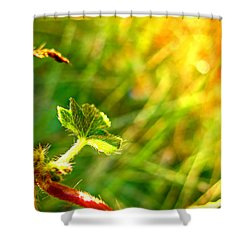 Shower Curtain featuring the photograph A New Morning by Debbie Portwood