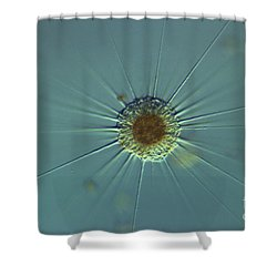 Actinophyrs Lm Shower Curtain by M. I. Walker