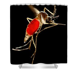Aedes Aegypti Mosquito Shower Curtain by Science Source