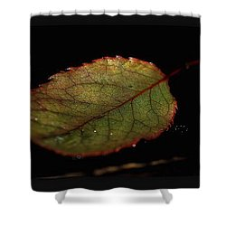 Shower Curtain featuring the photograph Changes by Marija Djedovic