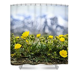 Alpine Meadow In Jasper National Park Shower Curtain by Elena Elisseeva