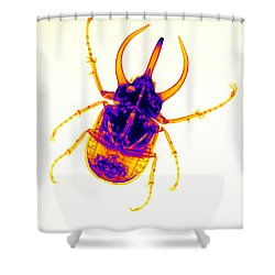 Atlas Beetle X-ray Shower Curtain by Ted Kinsman