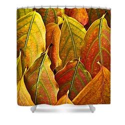 Autumn Leaves Arrangement Shower Curtain by Elena Elisseeva