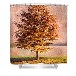 Autumn Light Shower Curtain by Hannes Cmarits