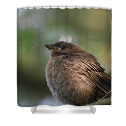 Baby Bird Shower Curtain by Cathie Douglas