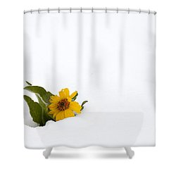 Balsamroot In Snow Shower Curtain by Hal Horwitz and Photo Researchers