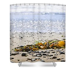 Beach Detail On Pacific Ocean Coast Shower Curtain by Elena Elisseeva