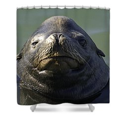 Shower Curtain featuring the photograph Big Face by Betty Depee