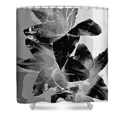 Shower Curtain featuring the photograph Black And White Lily by Carolyn Repka