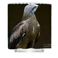 Black Kite 1 Shower Curtain by Heiko Koehrer-Wagner