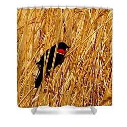 Blackbird In The Reeds Shower Curtain