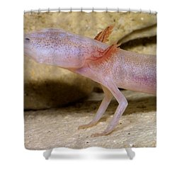 Blind Salamander Shower Curtain