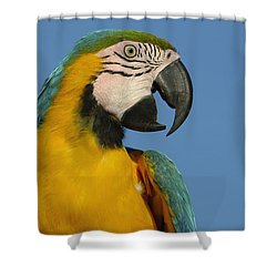 Blue And Yellow Macaw Ara Ararauna Shower Curtain by Pete Oxford