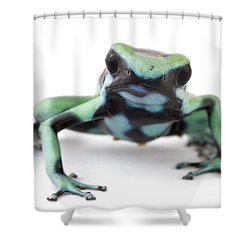Blue Poison Dart Frog Barbilla Np Costa Shower Curtain by Piotr Naskrecki