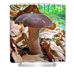 Bolete Mushroom Shower Curtain by Mother Nature