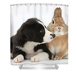 Border Collie Pup And Sandy Shower Curtain by Mark Taylor