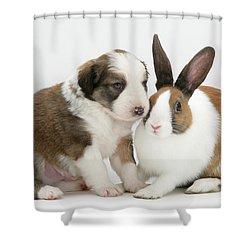 Border Collie Pup With Dutch Rabbit Shower Curtain by Jane Burton