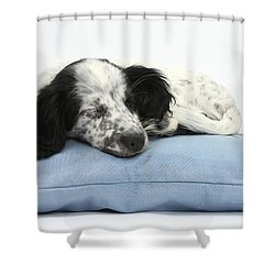 Border Collie X Cocker Sleeping Puppy Shower Curtain by Mark Taylor
