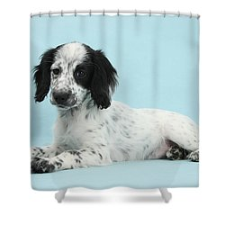 Border Collie X Cocker Spaniel Puppy Shower Curtain by Mark Taylor
