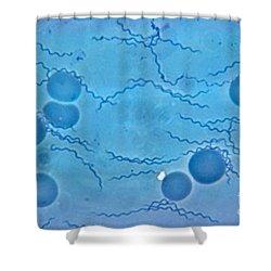 Borrelia Recurrentis Shower Curtain by Eric V. Grave