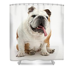 Bulldog Shower Curtain by Mark Taylor