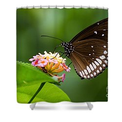 Shower Curtain featuring the photograph Butterfly by Fotosas Photography