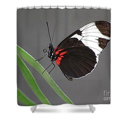 Shower Curtain featuring the photograph Butterfly  by Tam Ryan