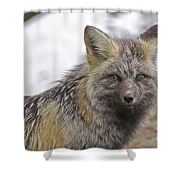 Cascade Red Fox Shower Curtain