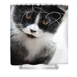 Cat In Chaotic Thought Shower Curtain
