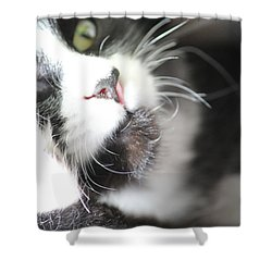 Cat Moment Shower Curtain