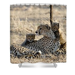 Cheetah Mother And Cubs Shower Curtain by Gregory G. Dimijian, M.D.