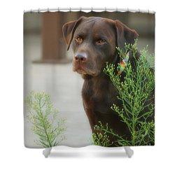 Chocolate Labrador - Womans Best Friend Shower Curtain by Donna Greene