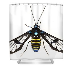 Clearwinged Tiger Moth Tapanti Np Costa Shower Curtain by Piotr Naskrecki