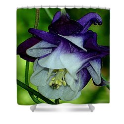 Shower Curtain featuring the photograph Columbine Flower by Katy Mei