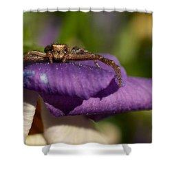 Crab Spider In A Violet Shower Curtain by Jouko Lehto